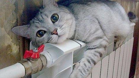 Кот и батарея